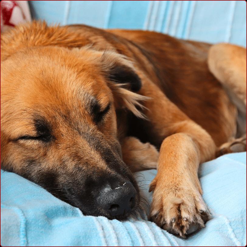 איך הכלב שלכם יכול לישון טוב יותר