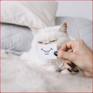 דיאטות לחתולים והמלצה לתזונה בריאה